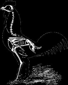voodoochickbones